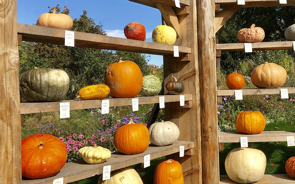 pumpkin origin display ludwigsburg pumpkin festival 2019