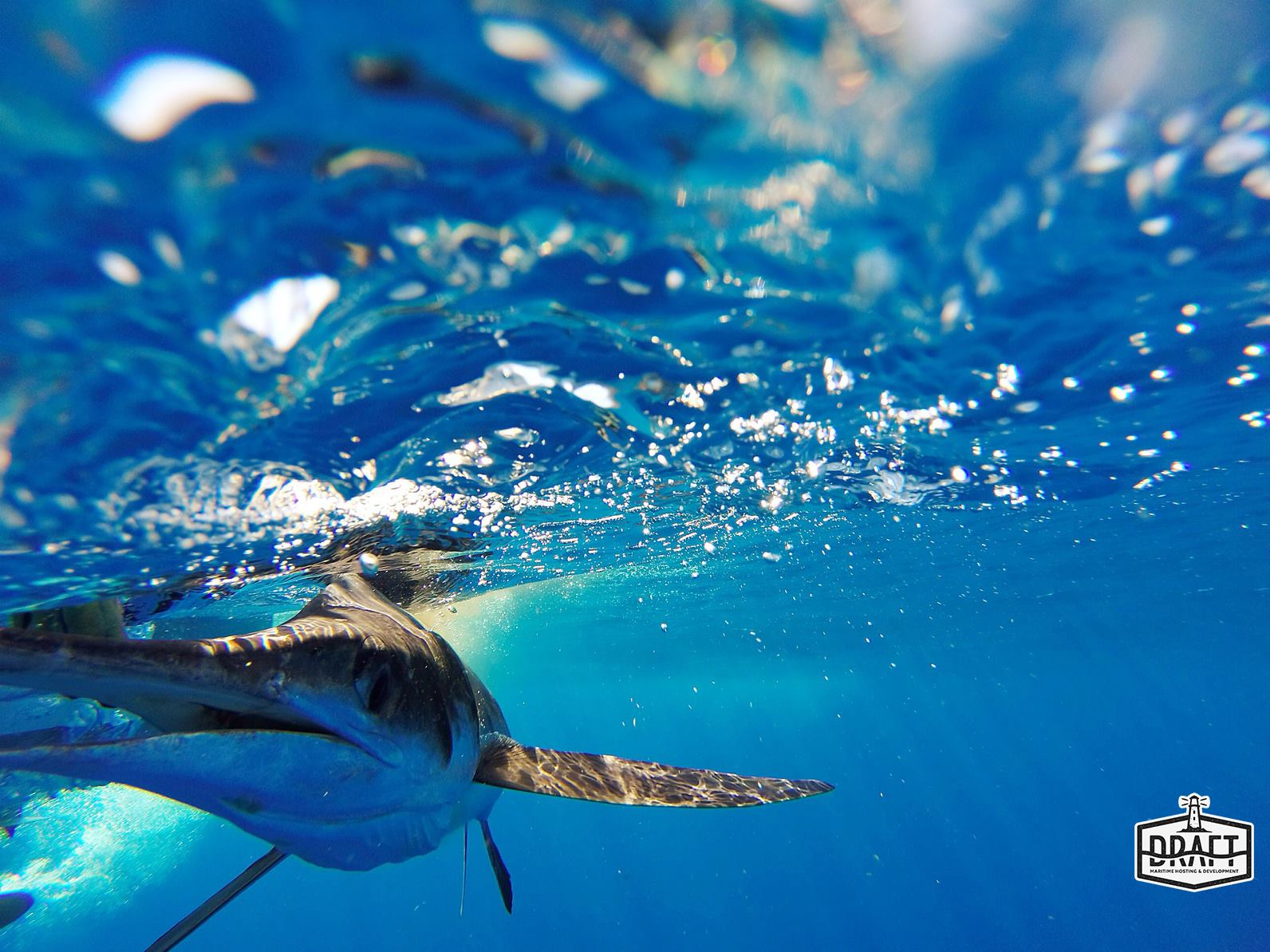 DRAFT Hosting - Bill Fish on Blue Water With Water Mark